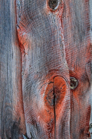 barnwood: Weathered barn wood shows worn red paint and knots in grain. Stock Photo