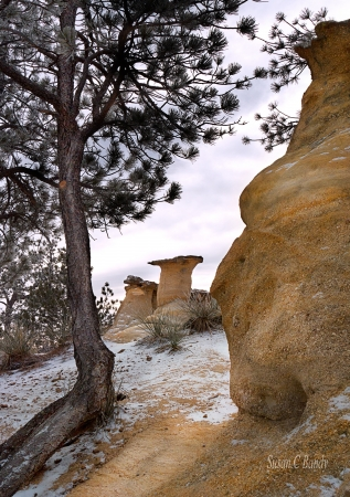 Snow has settled on rock formations and pine trees.
