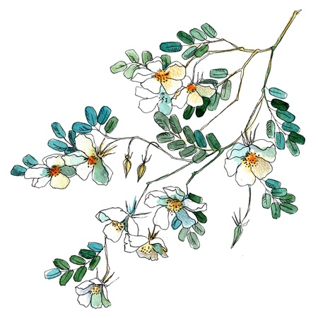 Watercolor flowers in a classical style on a white background