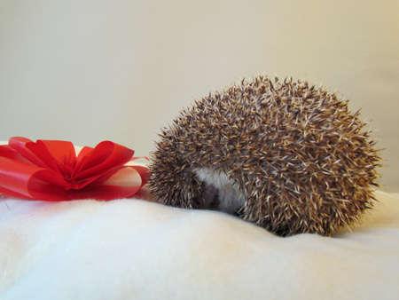 cranky: Cranky hedgehog and celebration