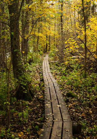 Duckboards in yellow colored autumn forest Stock Photo
