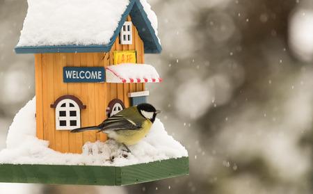 pajaros: Pequeño pájaro por una casa de alimentación