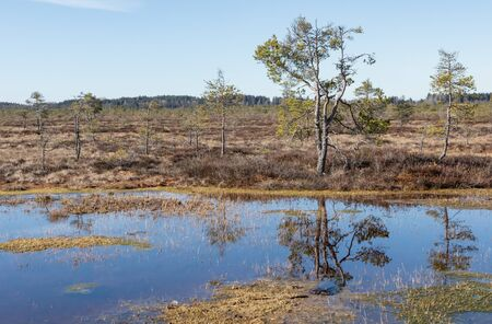 Sunny bog landscape and a pond Stock Photo