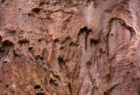 bark background texture: Baobab  tree bark background texture Stock Photo