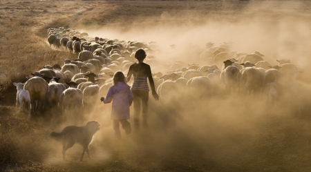 Two young girls herding the sheep along a farm track photo
