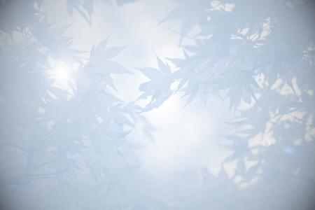 luto: El duelo de fondo con hojas de arce y la luz, en tonos de gris Foto de archivo