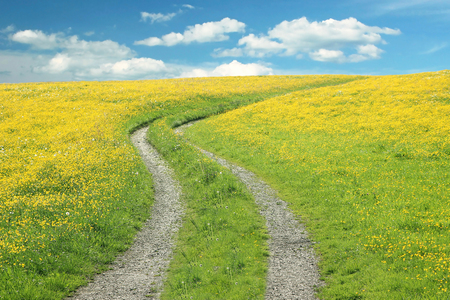 Curved way in a buttercup meadow against blue sky with clouds, summer landscape photo