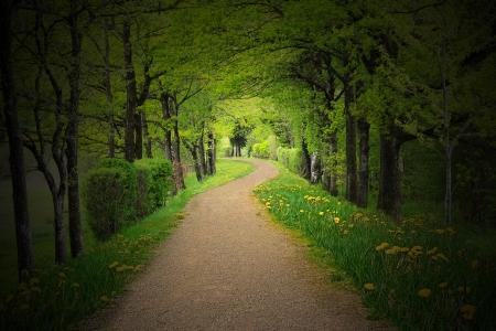 jungle green: Camino m�stico a trav�s de un bosque oscuro, con iluminaci�n de fondo