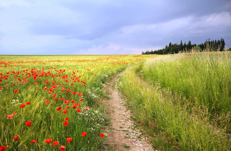 Country road through cornfield with red poppies, against dramatic sky photo