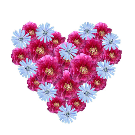corn flower: Flower heart made of cutout peony and corn flowers on white background Stock Photo
