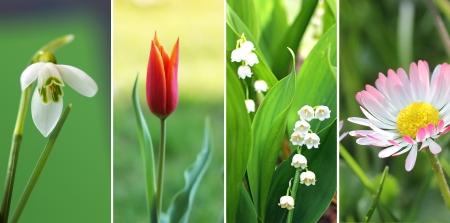 Collage de cuatro flores de la primavera 1 campanilla de cerca, 2 pequeño tulipán rojo, 3 lirio de los valles, 4 flor de la margarita en la hierba Foto de archivo