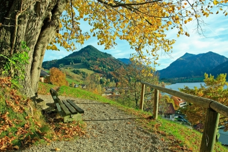 foothills: lookout point with bench and lime tree, lake schliersee  in autumnal landscape