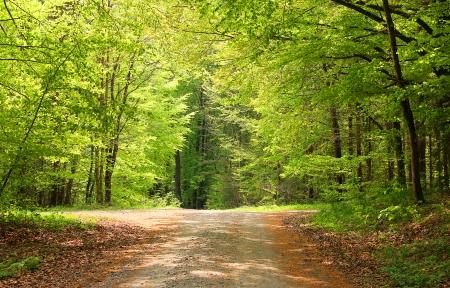 Cross-manier in een beuk bos op een zonnige dag in de lente
