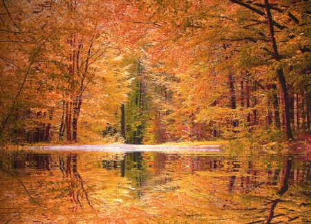 Autumnal beech tree forest with a little biotope, reflecting trees in the water