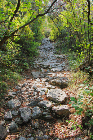 rocky footpath in the mountains, through shrubbery Standard-Bild