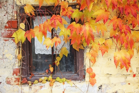 lattice window: old lattice window framed with vine leaves, rustic country house Stock Photo