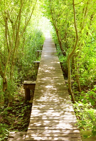 boardwalk into the light through green shrubbery