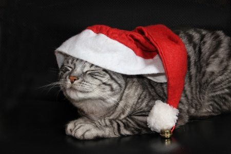 Funny cat with jelly bag cap, awaiting christmas  Black background  photo