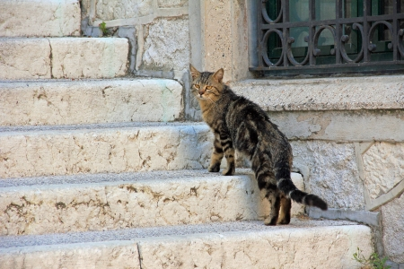 roaming: Straying cat on the staircase  Stock Photo