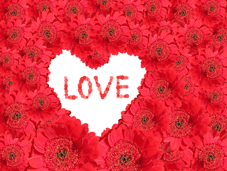 Red gerber daisy Background with white love heart  photo