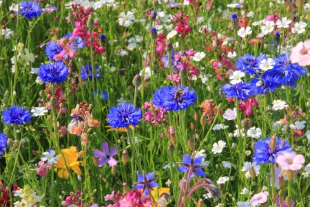 Beautiful wildflower meadow in vivid colors photo
