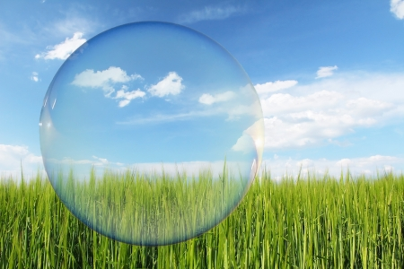 Think Green label, green wheat field and blue sky with clouds, design for ecology