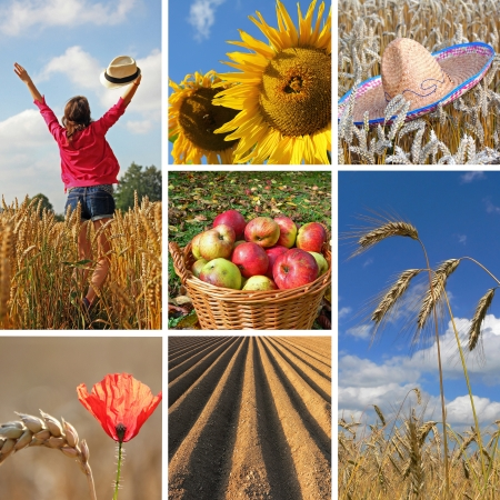 Happy harvest time, autumnal Collage  1  Girl in grainfield, 2  sunflowers, 3  mexican hat in grainfield, 4  red poppy and wheat, 5  apple basket, 6  soil, 7  barley field photo