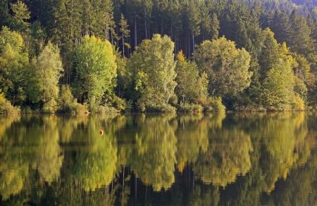 reflection water: Autunnale foresta di faggi, acqua di riflessione nello stagno Archivio Fotografico