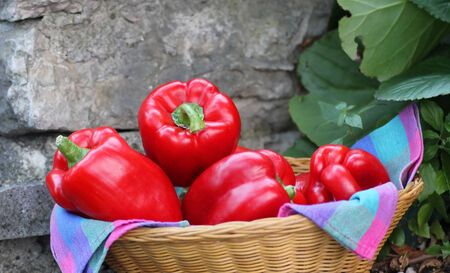 Red bell peppers in a wicker basket  Rustic rocky background and fig leaves photo