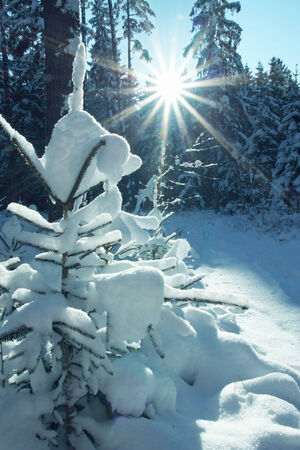 Snowy little fir with bright sunshine, christmas tree  photo