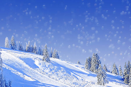 piste: Wintry slope with fir trees, christmas card design