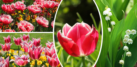 collage of tulips and lily in the valley, spring flowers  photo