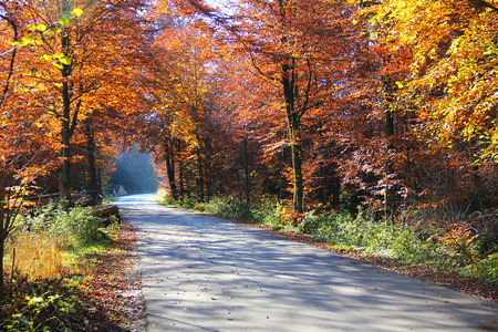 road autumnal: autumnal country road through beech forest, with light and shadow