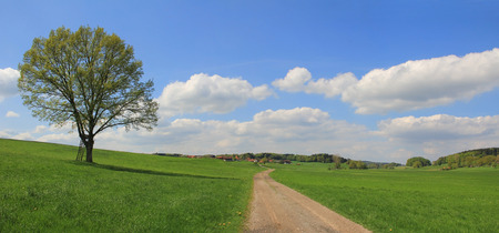 lonely tree and walkway, german countryside landscape  photo