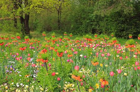 colorful flowerbed with frutillaria, paradise garden  photo