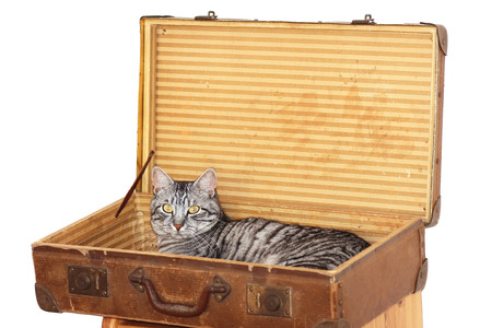 travelling with pet - tomcat in a suitcase, ready for journey photo