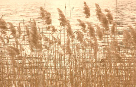 browns: lakeshore with reed, in soft browns Stock Photo