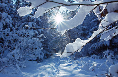 Wintry path in the woods with bright sunshine
