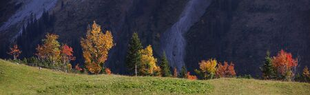 back lighting: colorful autumnal trees in the mountains, with back lighting