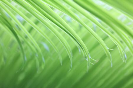 light soft green palm leaf, natural background photo