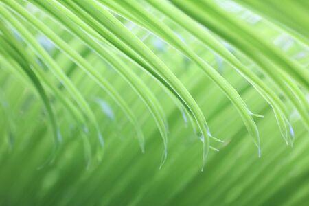 light soft green palm leaf, natural background photo