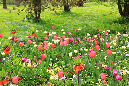 multicolored springlike flowerbed in the park  photo