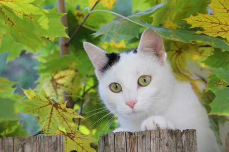 Playful cat in the maple tree