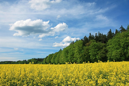 cloud scape: blooming canola field and green forest, bavarian cloud scape  Stock Photo