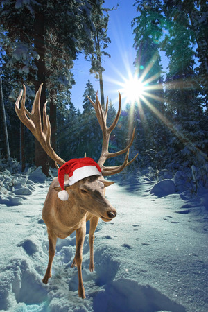 Deer with santa claus hat in the forest, christmas tale  photo