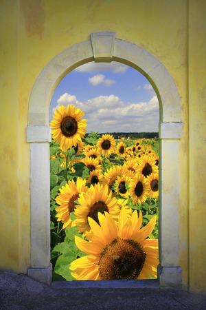 view through arched window to bright sunflower field