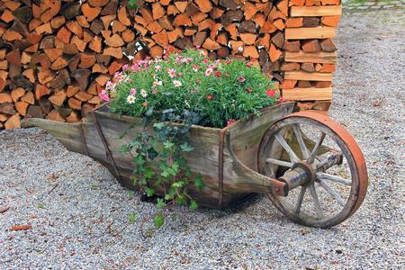 carretilla de mano: carretilla de mano de madera, lleno de flores de verano, decoración rústica Foto de archivo
