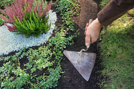 grave cultivation and maintainance, gardener planing with a trowel