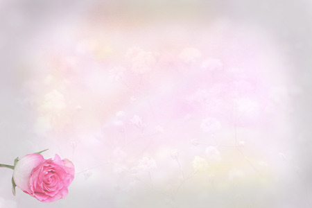 condolence: light pink floral background with rose bud, card design background Stock Photo