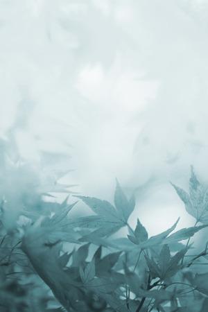 Rouw achtergrond met esdoorn bladeren en kopie ruimte, in grijstinten